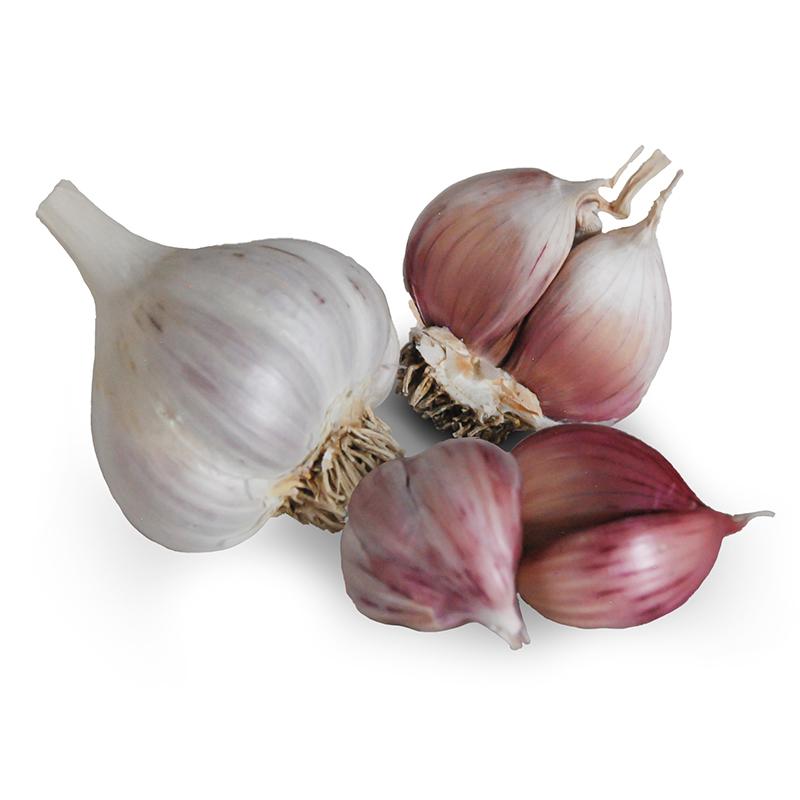 Ajo Rojo Hardneck Garlic