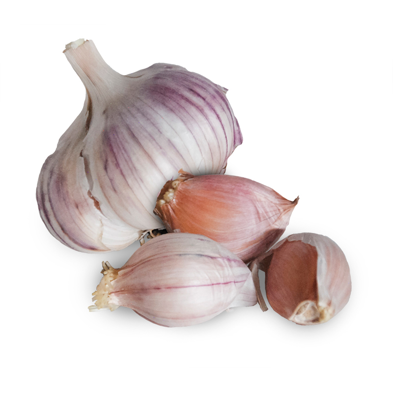 Blossom Hardneck Garlic