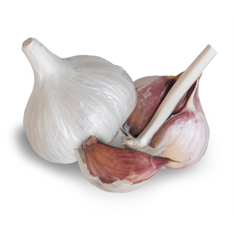 German White Stiffneck Hardneck Garlic