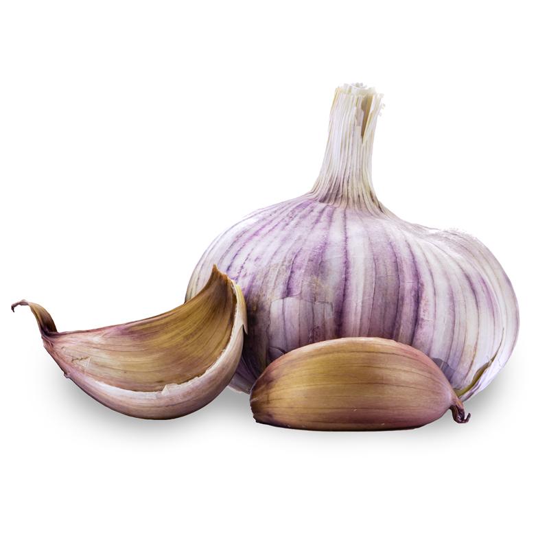 Russian Red Hardneck Garlic