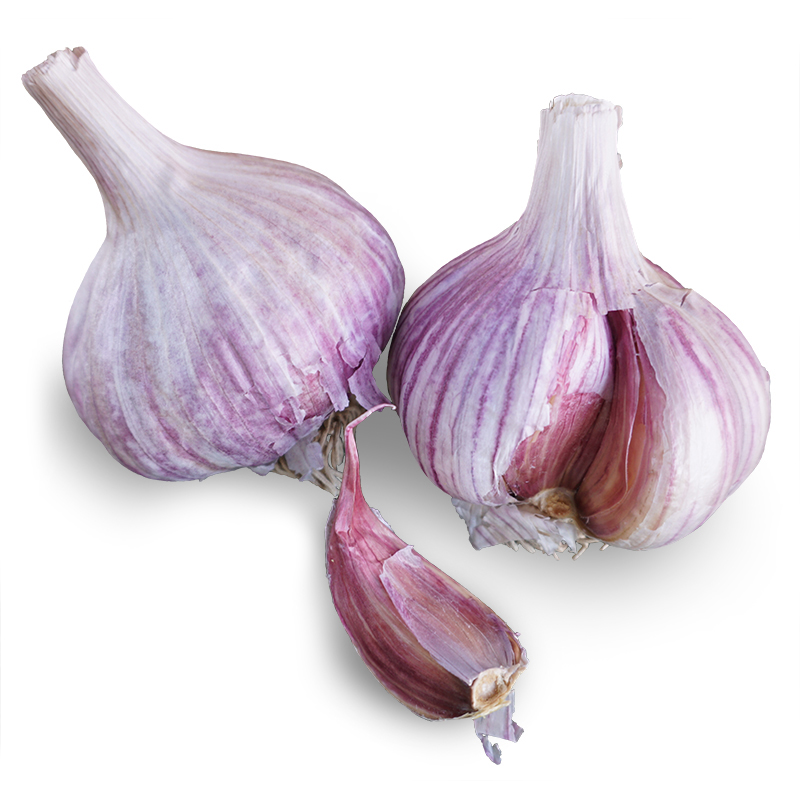 Chesnok Red Hardneck Garlic