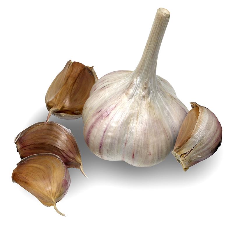 Metechi Hardneck Garlic