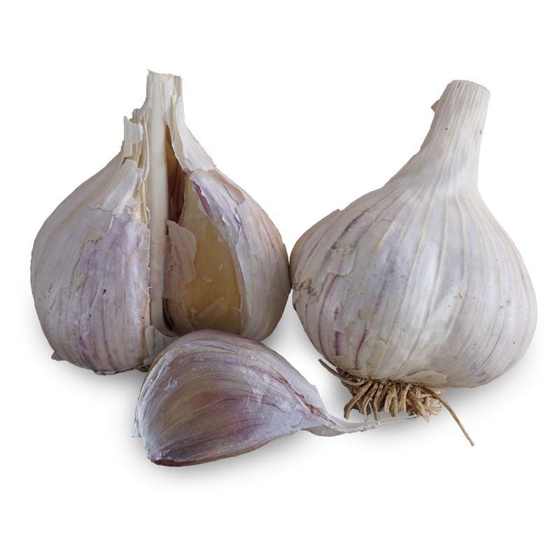 Music Hardneck Garlic