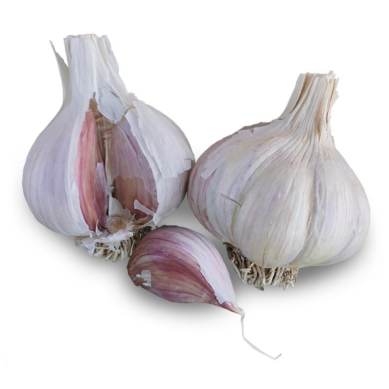 Montana Zemo Hardneck Garlic