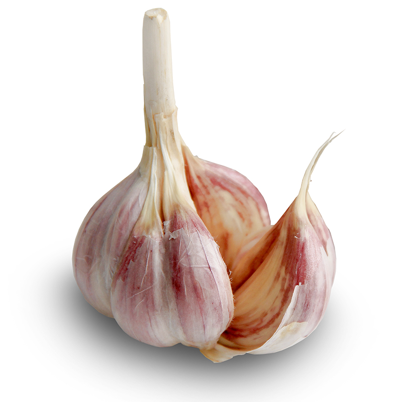Spanish Roja Hardneck Garlic