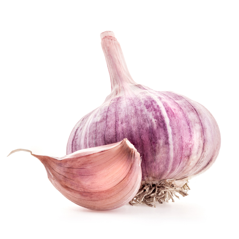 Purple Glazer Hardneck Garlic