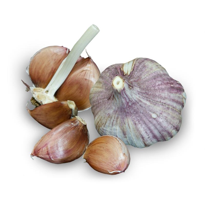 Thai Purple Hardneck Garlic