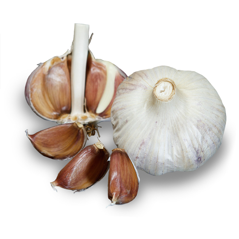 Island Rocambole Hardneck Garlic