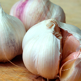 Garlic: Planting and Growing Guide