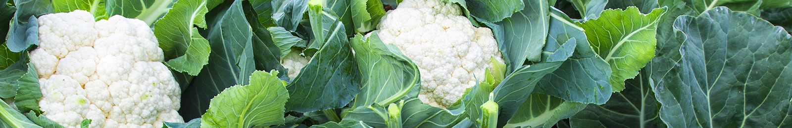 Cauliflower: Sow and Grow Guide