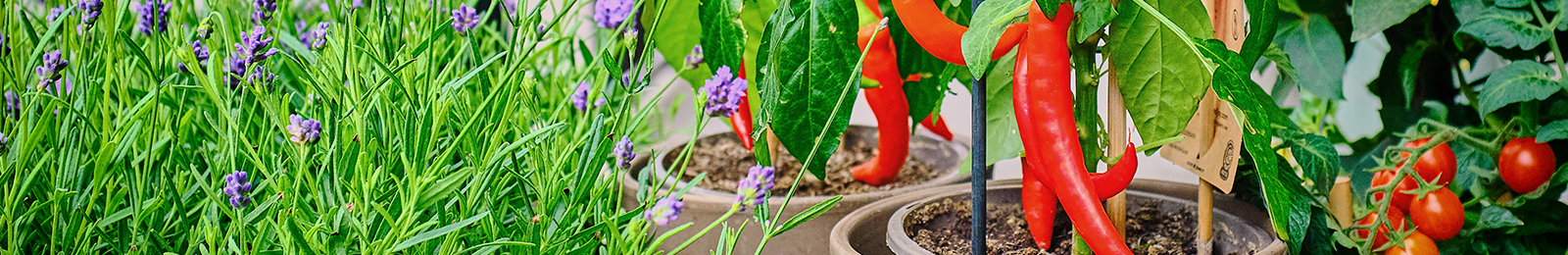 How to Grow Food in Containers and Small Spaces