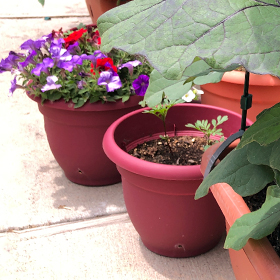 Small Space and Container Gardening for Beginners
