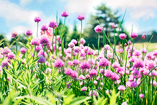 9 Plants to Repel Mosquitoes, Secrets to Success: Botanical