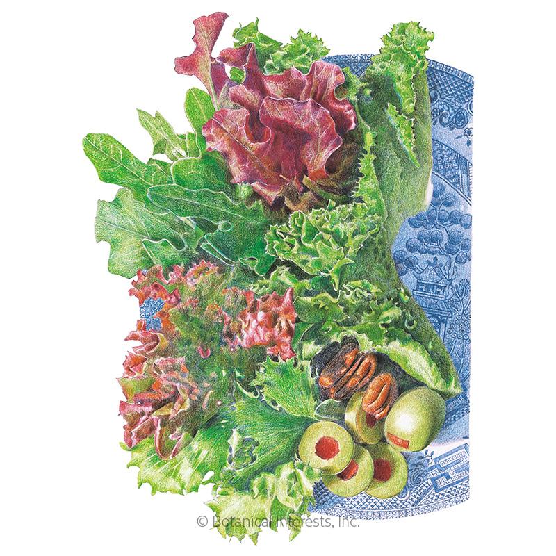 Farmer's Market Blend Mesclun Lettuce Seeds - New Size