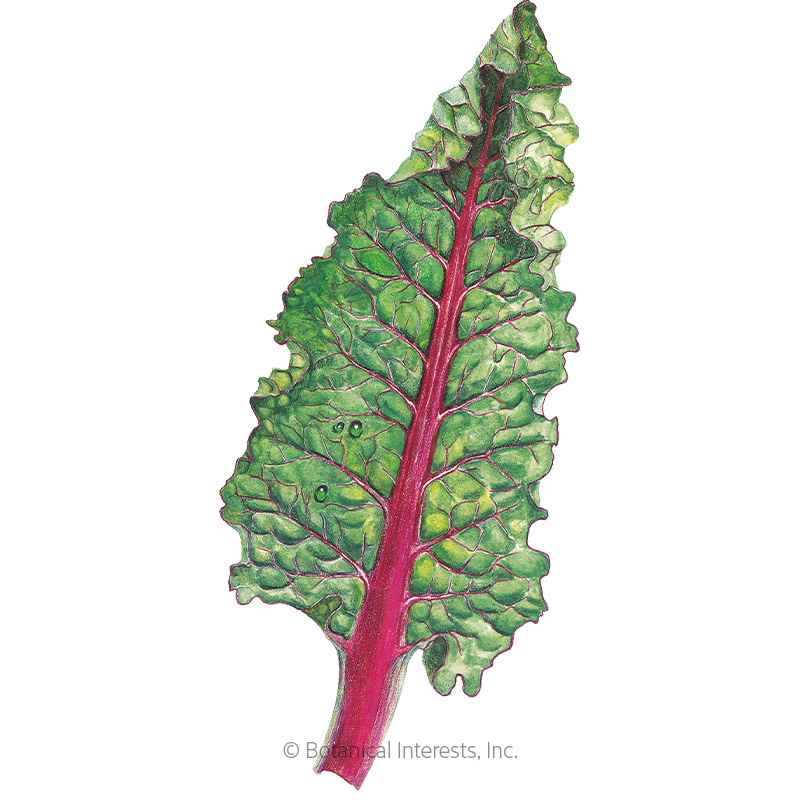 Ruby Red/Rhubarb Swiss Chard Seeds