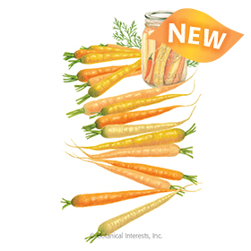 Rainbow Carrot Seeds - New