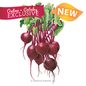 Robin Beet Seeds - New - Online Exclusive