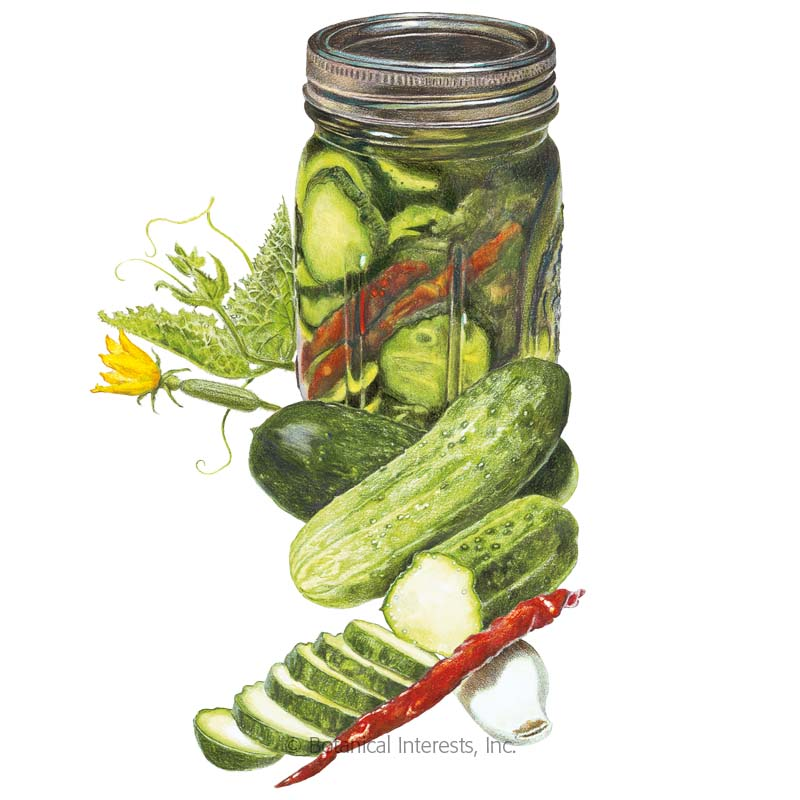 Homemade Pickles Cuber Seeds