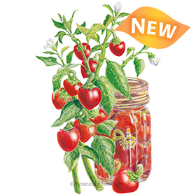 Red Cherry Sweet Pepper Seeds