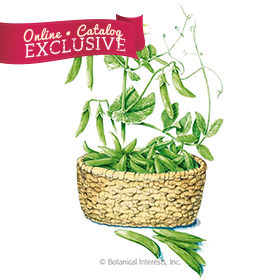 Tendersweet Snap Pea Seeds - Online Exclusive