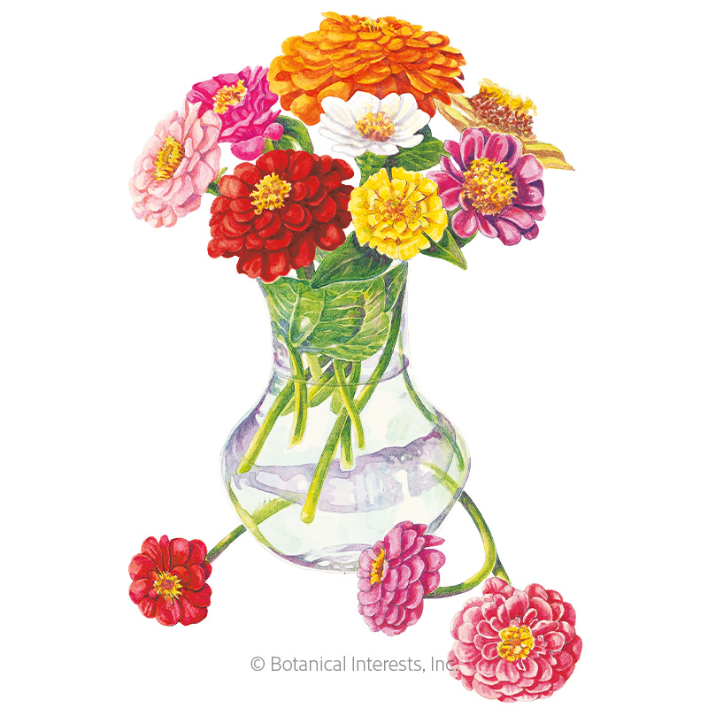 Cut And Come Again Zinnia Seeds View All Flowers Botanical