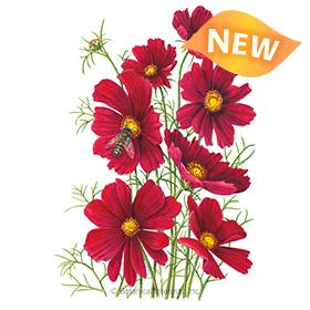 Rubenza Cosmos Seeds - New