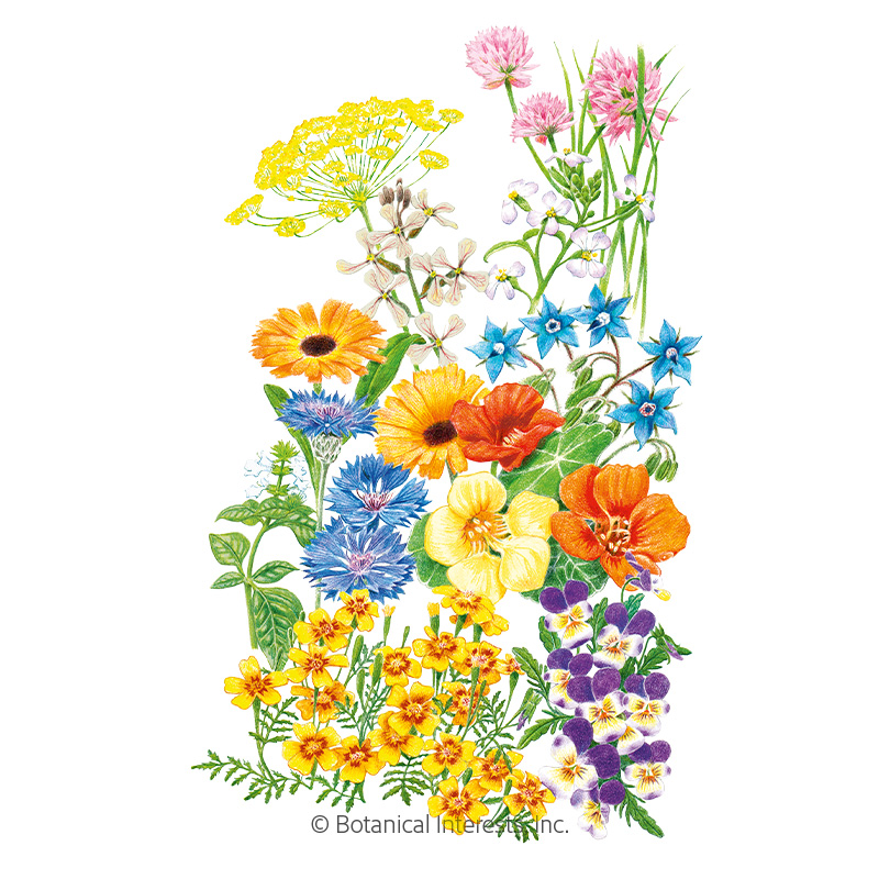 Edible Beauties Flower Mix Seeds