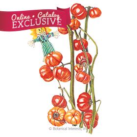 Pumpkin on a Stick Seeds     - Online Exclusive