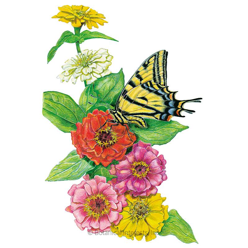 Thumbelina Zinnia Seeds