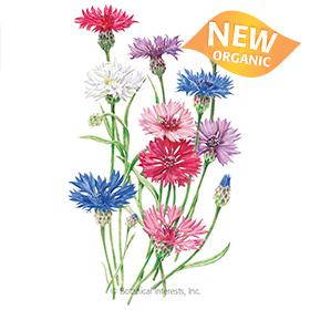 Tall Blend Bachelor's Button Seeds     - New Organic