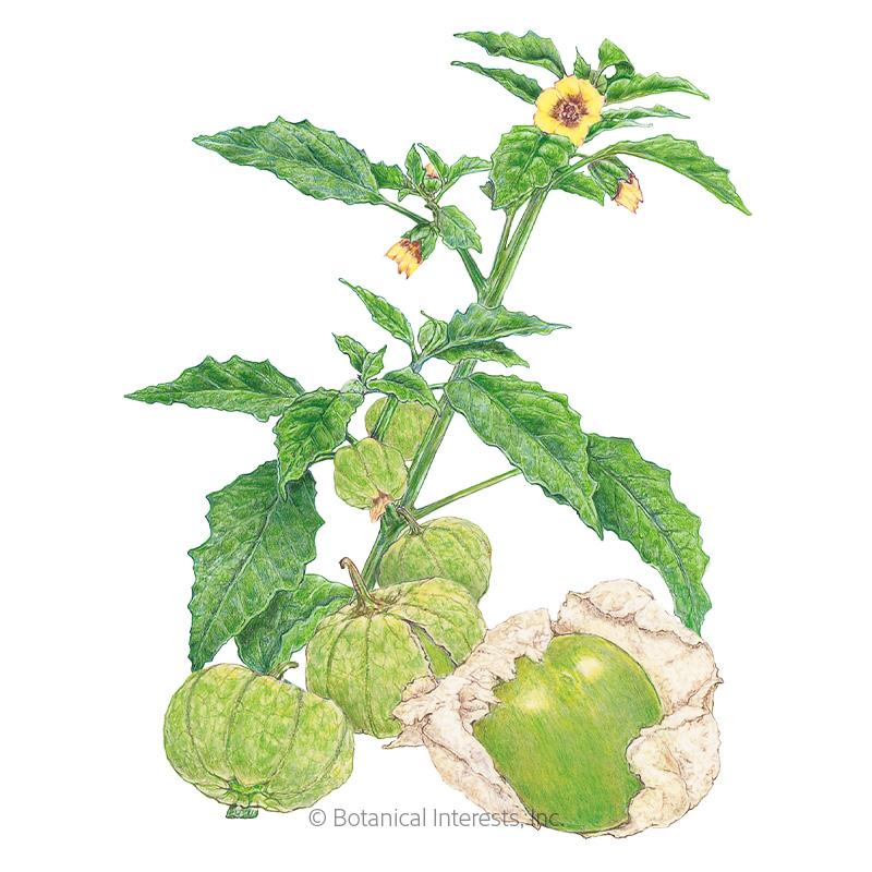 Grande Rio Verde Tomatillo Seeds