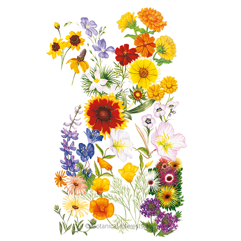 Water-Wise Garden Flower Mix Seeds