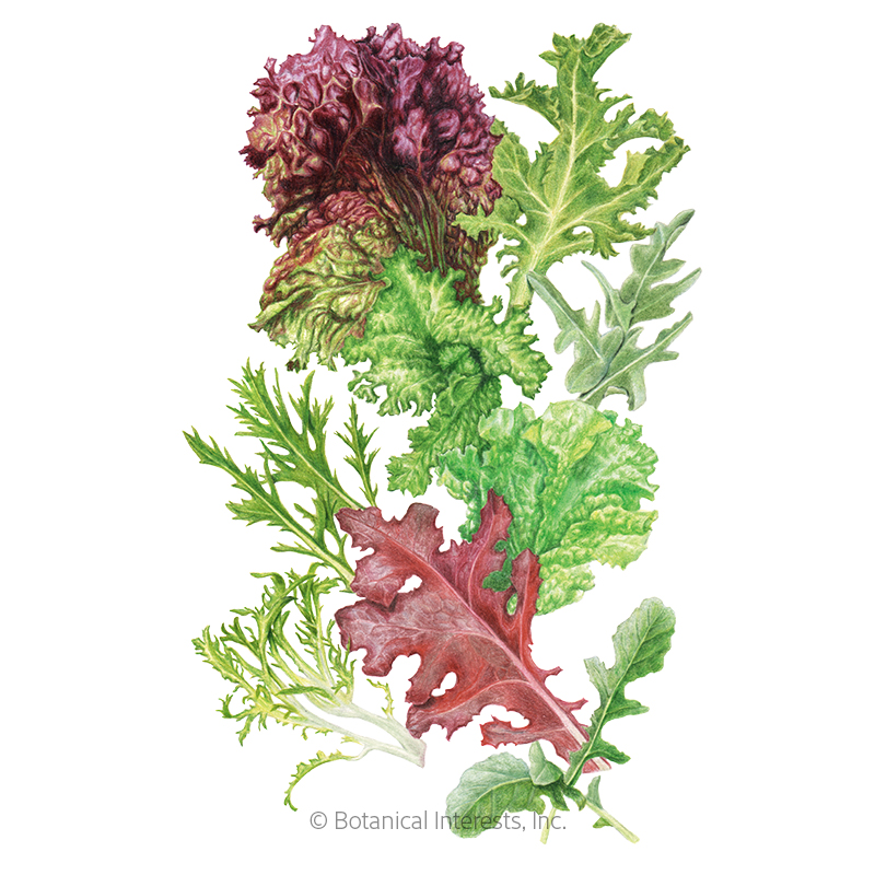 Chef's Gourmet Spicy Mix Mesclun Lettuce Seeds