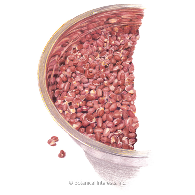 Adzuki Bean Sprouts Seeds