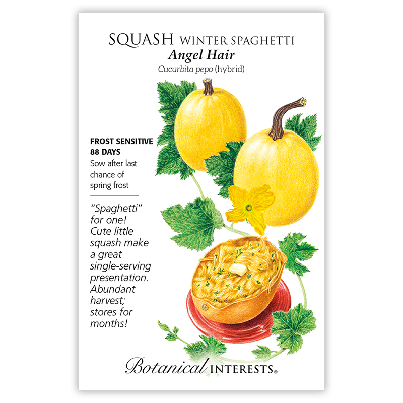 Angel Hair Winter Spaghetti Squash Seeds