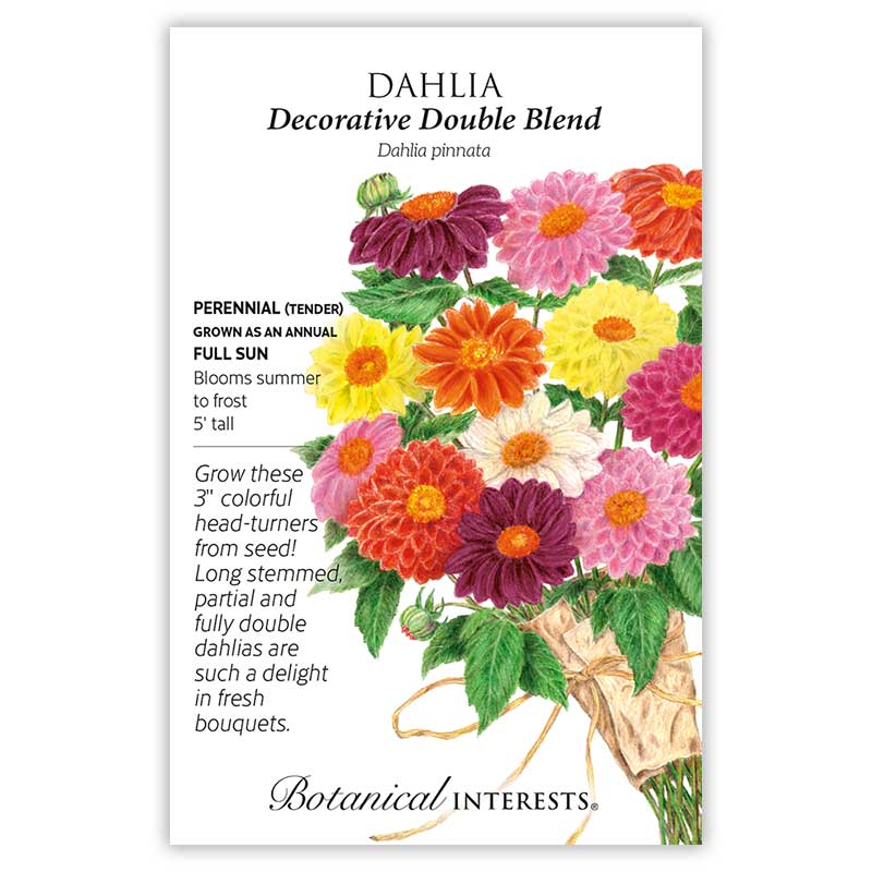 Decorative Double Blend Dahlia Seeds view 3