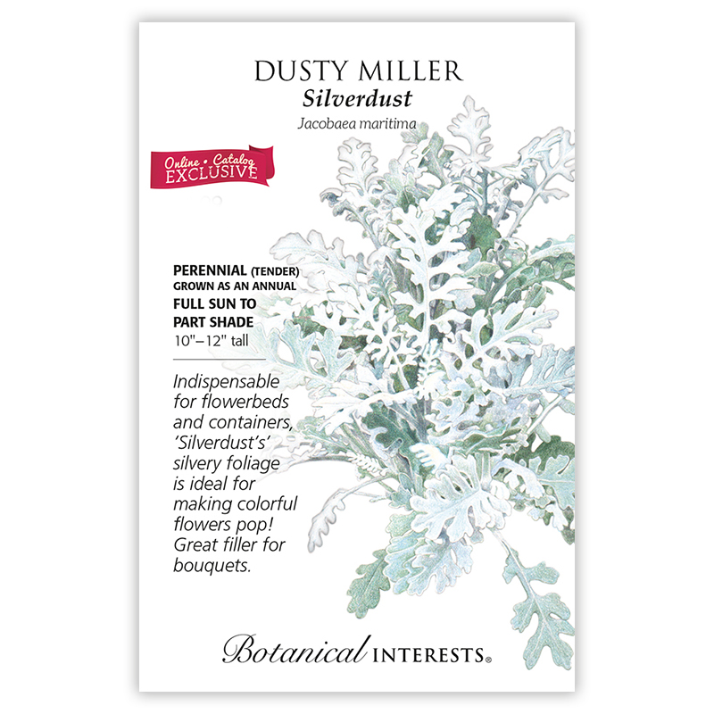 Silverdust Dusty Miller Seeds