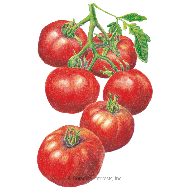 Red Siberian Bush Tomato Seeds
