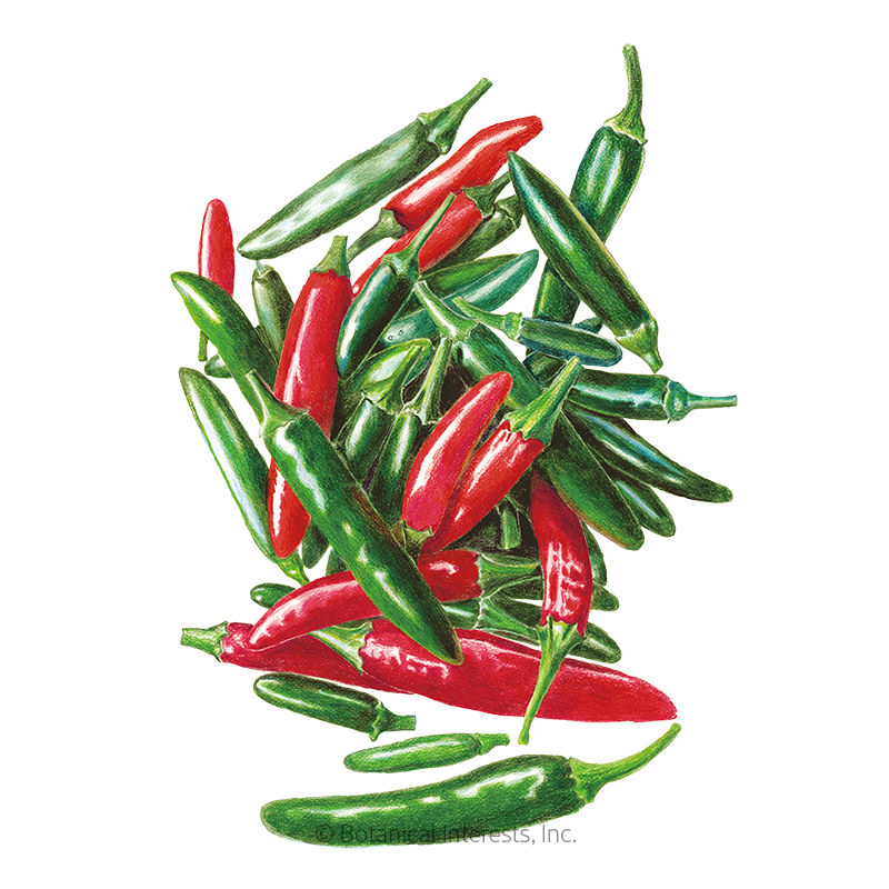Serrano Chile Pepper Seeds Vegetables Botanical Interests