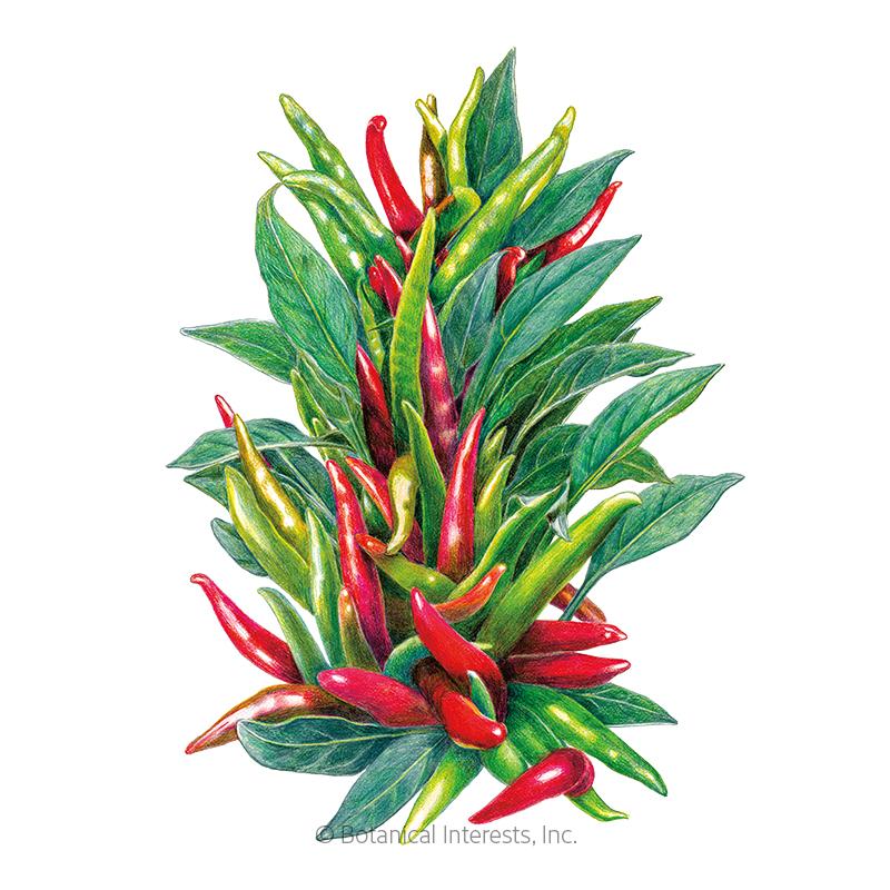 Santaka Chile Pepper Seeds Vegetables Botanical Interests