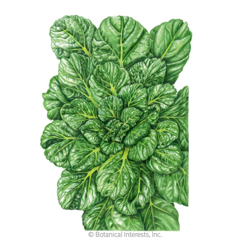 Rosette Tatsoi Bok Choy Seeds