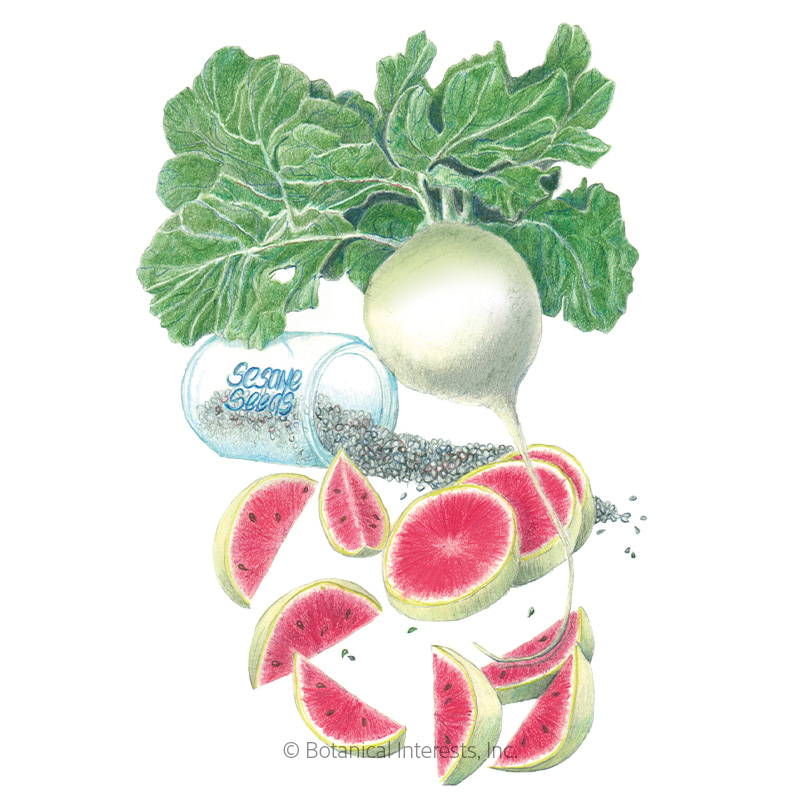 Mantanghong Watermelon Radish Seeds