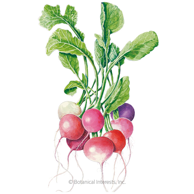 Grow Your Best Fall Garden Vegetables: Easter Egg Blend Radish Seeds, View All Vegetables
