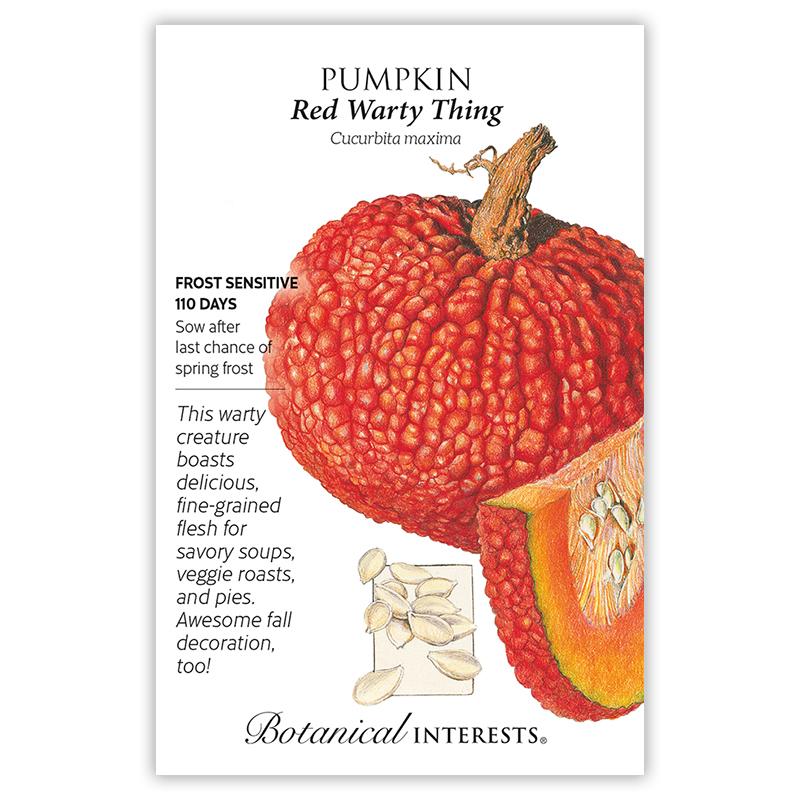 red warty  pumpkin seeds view  vegetables botanical interests