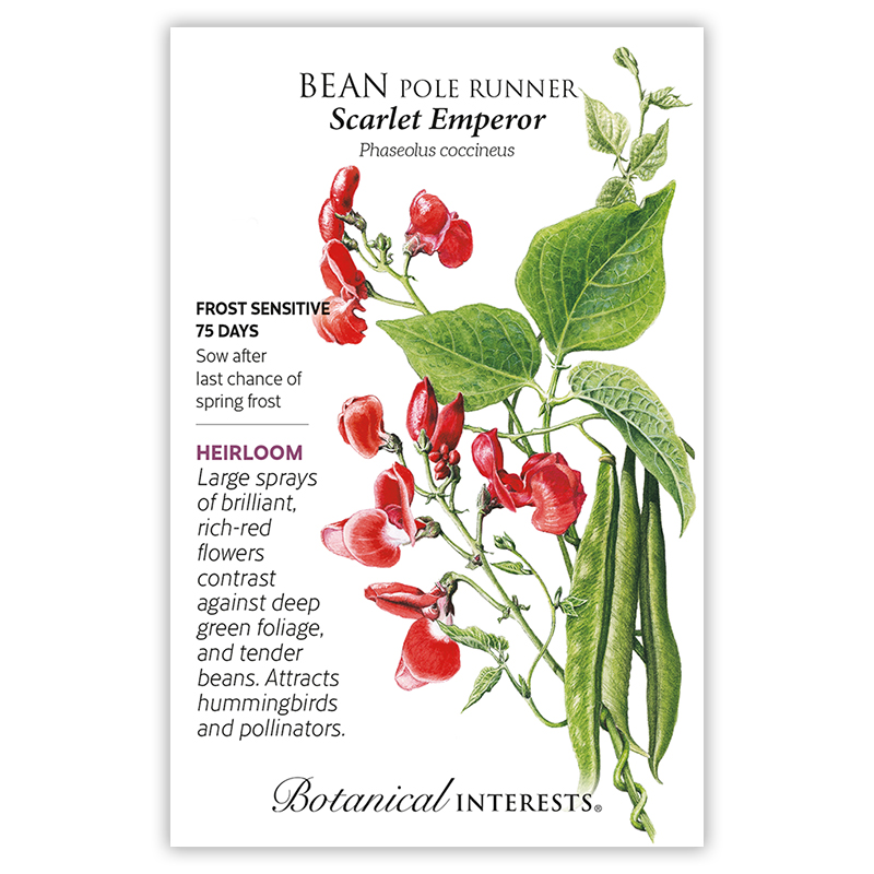 scarlet emperor pole runner bean seeds view all