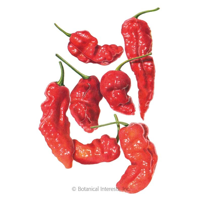 Ghost Bhut Jolokia Chile Pepper Seeds Vegetables Botanical Interests