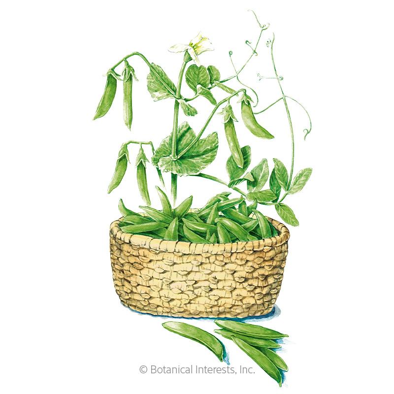 Tendersweet Snap Pea Seeds