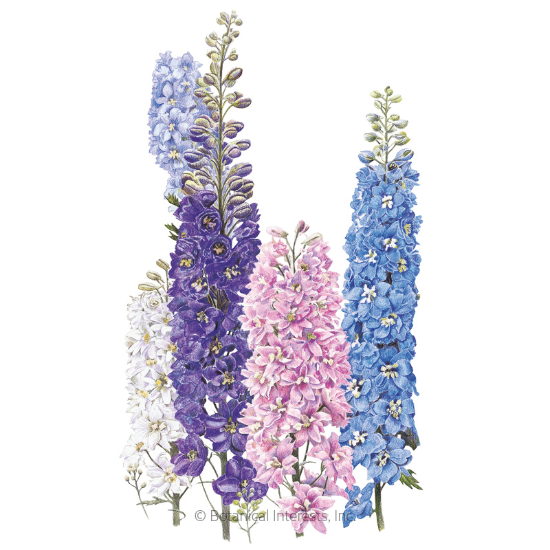 Pacific Giants Blend Delphinium Seeds