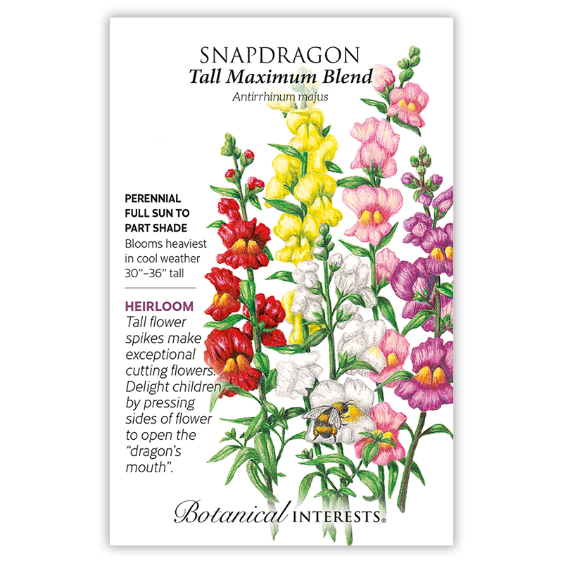 tall maximum blend snapdragon seeds   view all flowers