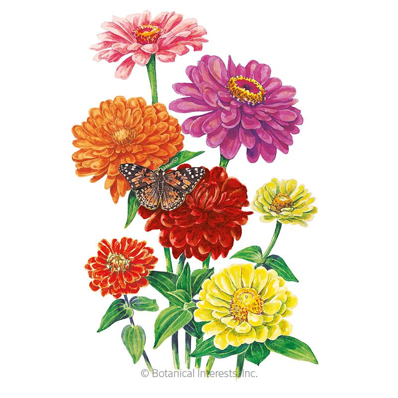 California Giants Zinnia Seeds Flowers Botanical Interests